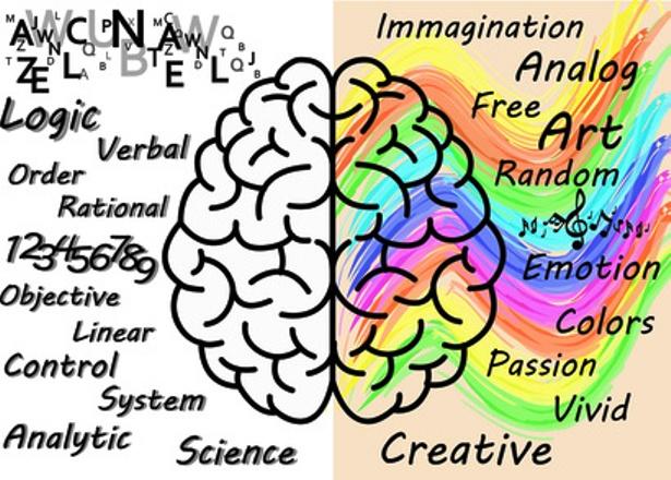 cervello destra e sinistra