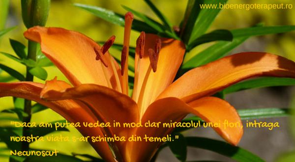 miracolul florilor